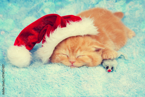 Sleeping little kitten wearing Santa Claus hat