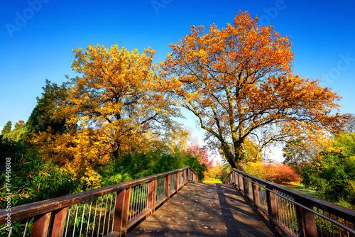 Staande foto Natuur Holzbrücke und schöne bunte Natur im Herbst