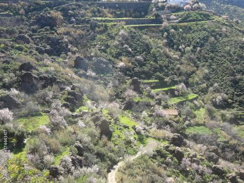 Keuken foto achterwand Donkergrijs Valle de almendras en flor