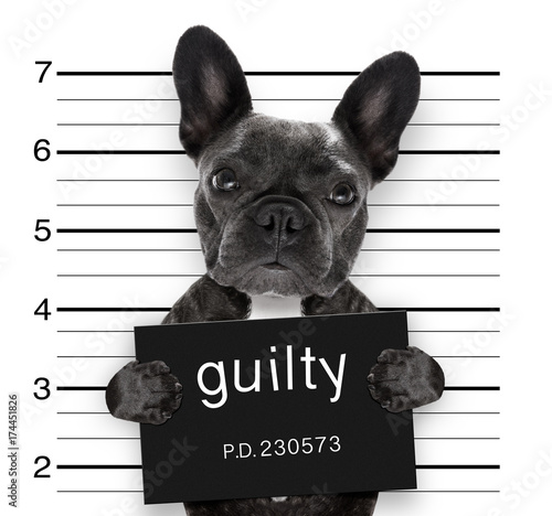 Keuken foto achterwand Crazy dog mugshot dog at police station