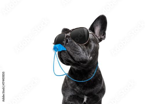 Papiers peints Chien de Crazy Referee dog with whistle