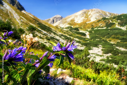 Violet flowers in West Tatras, Slovakia Poster