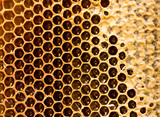 honey comb with honey as a background - 174462614