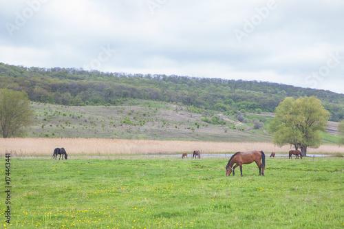 rustic scene with horses
