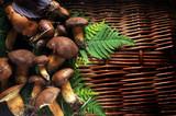 Boletus edulis Sprugnolu Steinpilze Pravé hřiby Hongos Funghi Cèpe Porcini Cogumelo porcino Mushrooms - 174467499