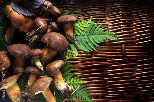 Fototapeta Boletus edulis Sprugnolu Steinpilze Pravé hřiby Hongos Funghi Cèpe Porcini Cogumelo porcino Mushrooms