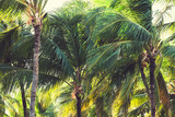 Palm trees, natural tropical forest background - 174494457