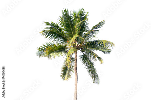 Natural photo of coconut tree isolated on white - 174494438