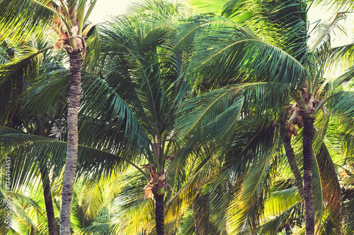 Palm trees, natural tropical forest background