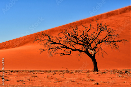 Poster Baksteen Tree in Namibia