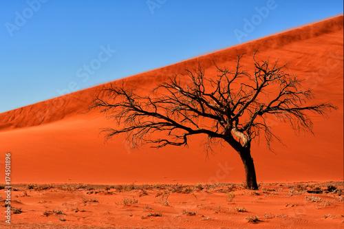 Staande foto Baksteen Tree in Namibia