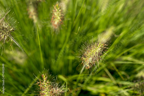 Fotobehang Groene Bright spring grass field with sunlight bokeh background; selective focus