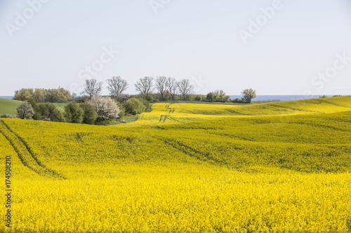 Staande foto Oranje Skåne landscape