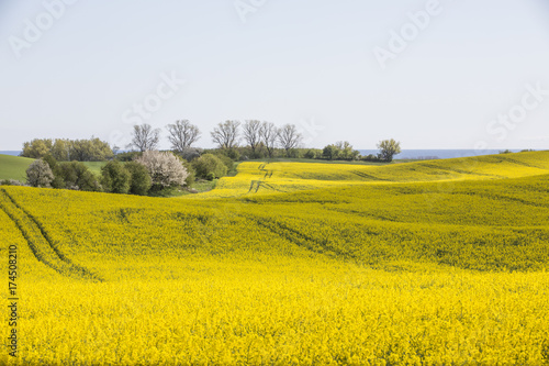 Foto op Aluminium Oranje Skåne landscape