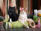 Funny cat in a beauty salon for animals