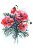 poppies  illustration hand drawn painted watercolor