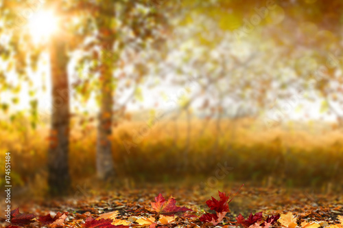 Tuinposter Herfst Beautiful autumn landscape with yellow trees,green and sun. Colorful foliage in the park. Falling leaves natural background