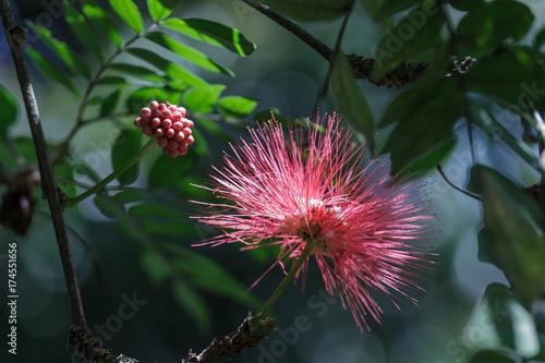 Papiers peints Nature red flower