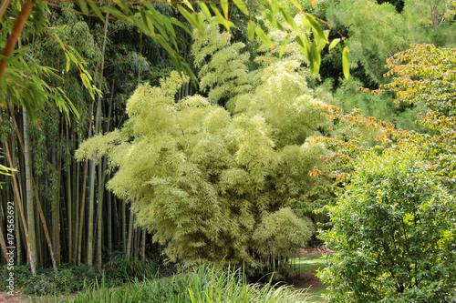 Poster Pistache arbres superbes