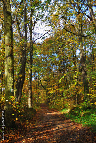 Foto op Canvas Weg in bos Forêt française en automne - Autumn in a French forest