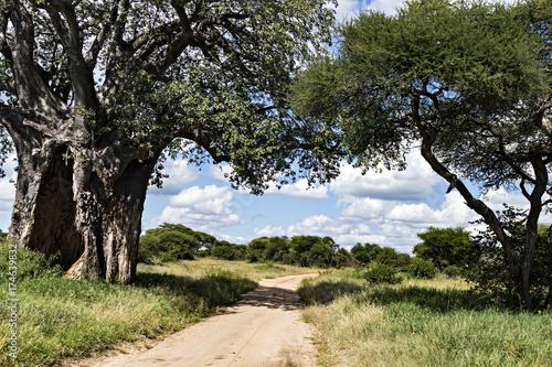 Fotobehang Baobab Baobab Tree & Road