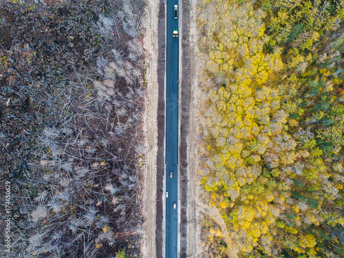 burned forest from above