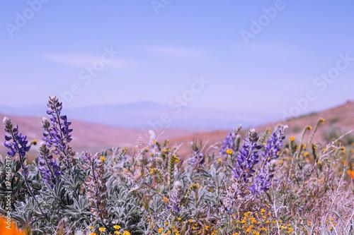Fotobehang Lavendel antelope canyon