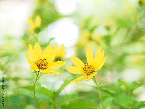 Deurstickers Zwavel geel 寄り添うかわいい花