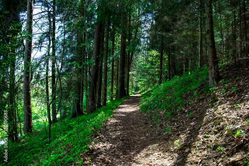 Keuken foto achterwand Weg in bos Weg mit Sonnenstrahlen im Byerischen Wald