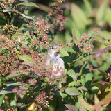 sparrow hides in the branches - 174702226