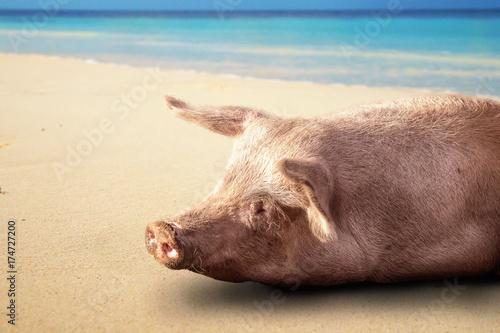 Glückliches Schwein am Strand Poster