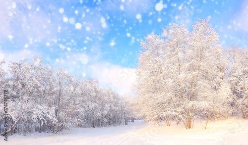 Foto op Canvas Wit Christmas snowfall in park