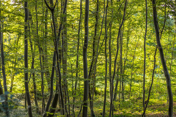 foret automne © Philippe