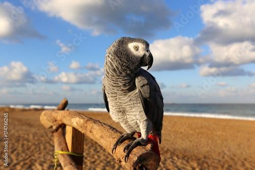Aluminium Papegaai попугай