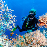 SCUBA diver near a large fan coral on a tropical reef - 174767079