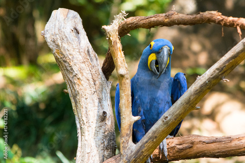 Fotobehang Rio de Janeiro Happy Macaw Framed by Branches