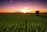 Landscape of Green Field and Beautiful Sunset