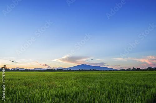 Fotobehang Lente Landscape of Green Field and Beautiful sky