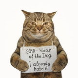 The cat is holding a funny banner . White background. - 174804800
