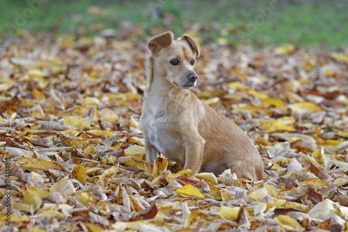 Fototapeta Maneto-Mix im Herbstlaub