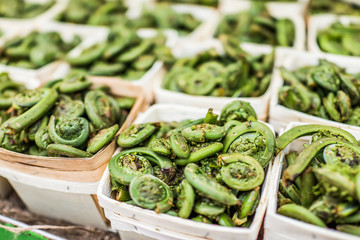 Macro closeup of fiddlehead ferns in baskets on display at market