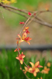 Young red leaves on tree in spring - 174848062