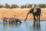 Etosha Wilderness, Namibia, Africa - 174854675