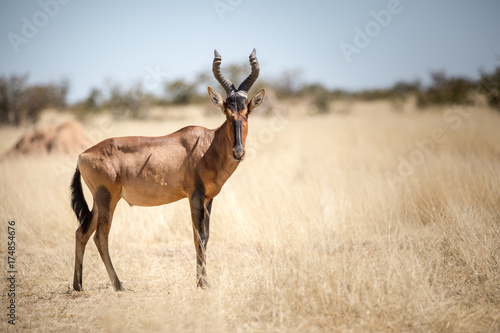 Naklejka Etosha Wilderness, Namibia, Africa
