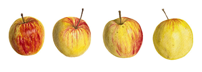 Watercolor illustration of apples © Irina Violet