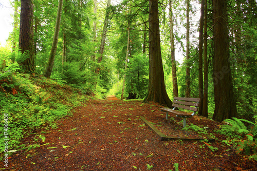 Fotobehang Natuur a picture of an Pacific Northwest forest trail