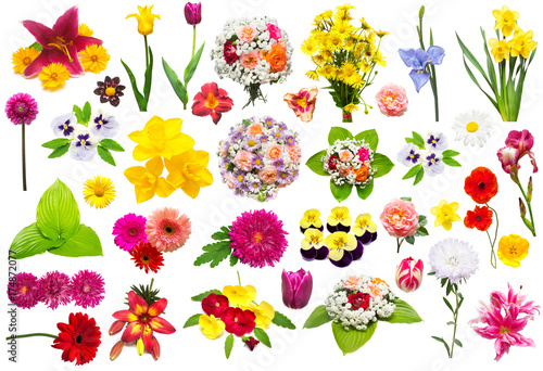 Foto op Canvas Lilac Creative collection flower set with roses, chamomiles, chrysanthemum, iris, gerbera, lily, aster, narcissus, poppy, pansies and other isolated on white background. Summer, flora, spring
