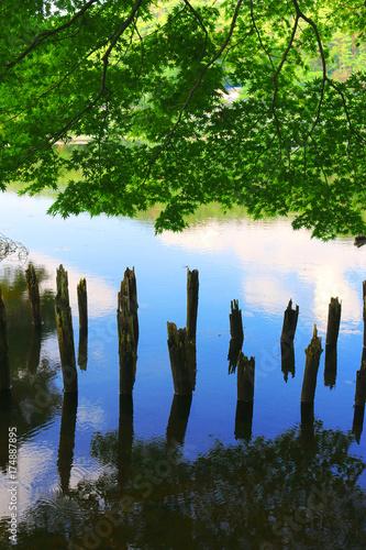 Deurstickers Groene 南湖公園(福島県・白河市)