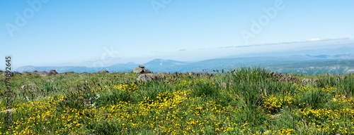 Wild grass on highland meadow in the summer time in Artvin