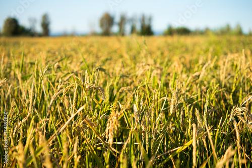 Agricultural fields in the delta, Tarragona, Catalunya, Spain. Blurred background.